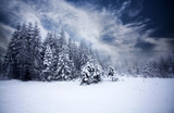 Fototapety Foggy winter landscape with firs