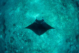 Manta Ray in Deep Water