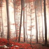 Lovely red colored autumn season beech tree leaf forest at foggy day. Seasonal red colored woodland. Picture was taken in south east Slovenia, Europe. - 93417246