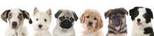 Verschiedene Welpen  Hunde Köpfe Aufgereiht Sticker