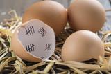 Cuenta atrás o concepto de libertad y abandono en la cáscara de un huevo