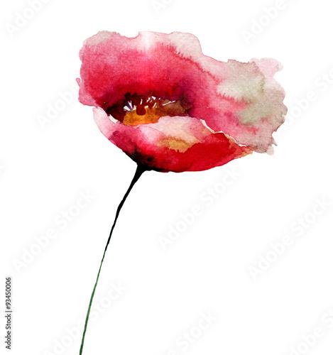 Poppy flower © Regina Jersova