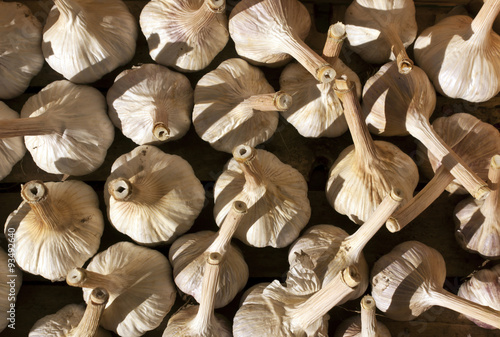 Pile of dry garlic. Poster