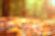 Autumn background blurred orange