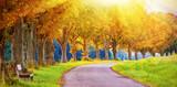 Weg mit Bank im Herbst