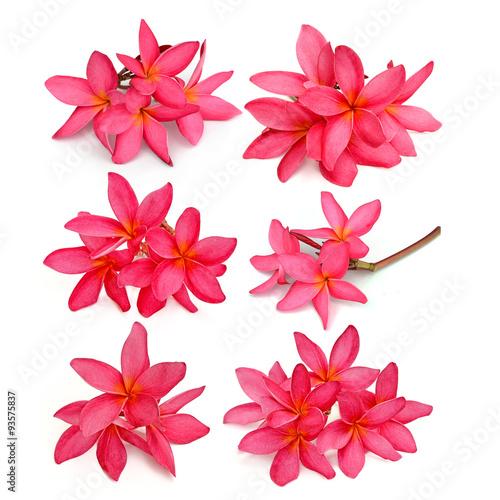 Tropical flowers frangipani (plumeria) isolated on white backgro