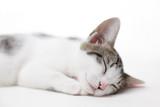 Fototapety 眠る子猫