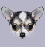 Illustrative Portrait of Chihuahua Puppy. Cute bi-colour little dog (black & white).