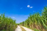 サトウキビ畑と青空