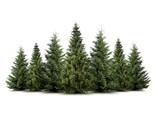Fototapety Weihnachtsbäume