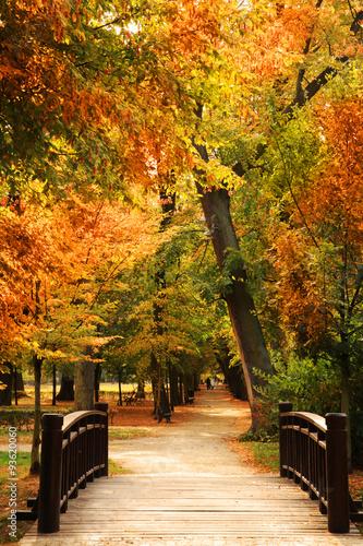 drewniany-mostek-w-parku
