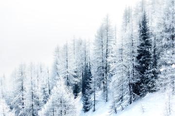 Pokryte śniegiem lasu