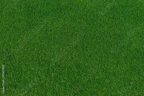 Poster Gras real green grass background