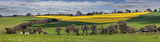 Green pastures and fields of Gold