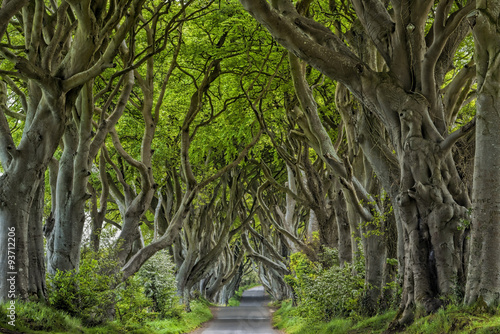 irlandia-aleja-dark-hedges
