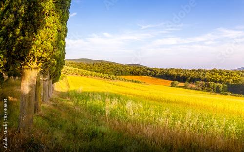Fototapeta Tuscan landscape