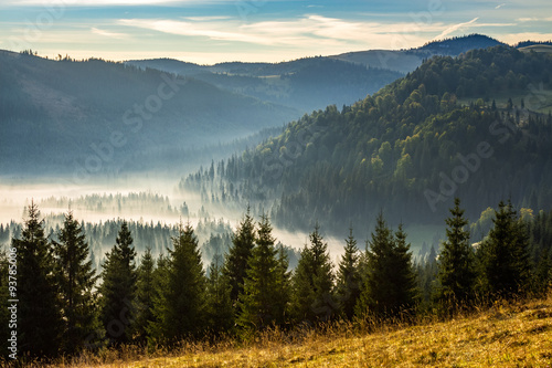 coniferous forest in foggy Romanian mountains at sunrise - 93785006