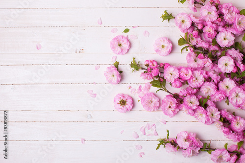 Poster Background with bright pink   flowers on white  wooden planks.
