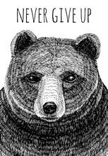 Nunca renunciar a lema. oso de la mano ilustración dibujada
