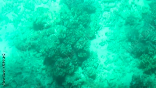 Foto op Canvas Groene koraal Great Barrier Reef, Queensland, Australia