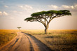 Quadro African Landscape - Tanzania