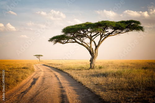 Poster African Landscape - Tanzania