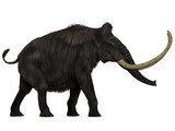 Woolly Mammoth Side Profile -The Woolly Mammoth was a herbivore that lived during the Pleistocene Period of Eurasia and North America.  poster