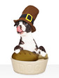 Dog Eating Thanksgiving Dinner