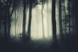 dark spooky forest