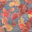 Постер, плакат: Замерзшие листья клена Осенний фон