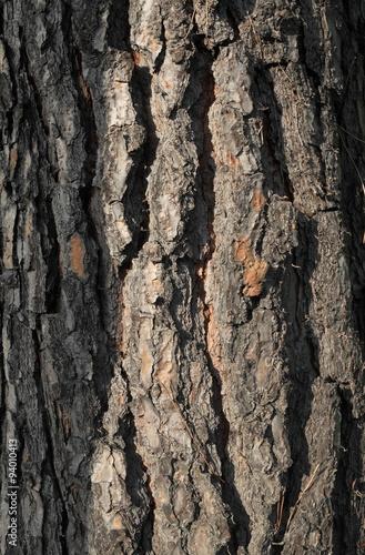 Corteccia albero vendita