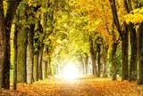 Fototapeta Przestrzenne - (Melancholische) Herbstidylle © Jamrooferpix