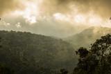 Tropical rainforest at Phu thap boek, Phetchabun Province, Thailand
