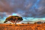 Nullarbor Plain, Australia