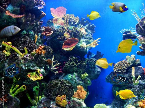 Tuinposter Koraalriffen Colorful and vibrant aquarium life