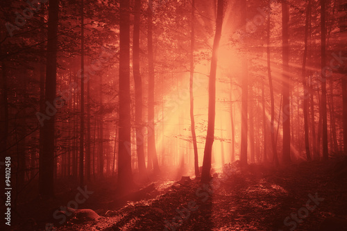 Fototapeta Marsala red color creepy light in foggy forest landscape. Halloween Holiday colored forest scene.