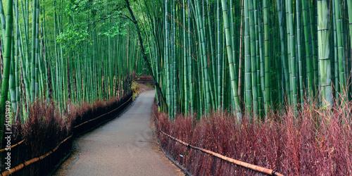 Bamboo Grove © rabbit75_fot