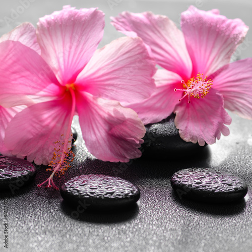 beautiful spa background of pink hibiscus flowers on zen basalt