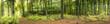 Obrazy na płótnie, fototapety, zdjęcia, fotoobrazy drukowane : Wald mit Sonnenstrahlen, Panorama