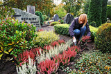 Planting Calluna on a Grave in Autumn, Germany