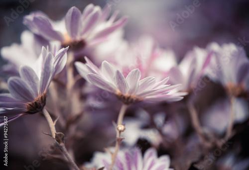 fresh fall garden flowers at abstarct background