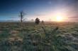 misty sunrise over marsh in spring