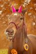 Obrazy na płótnie, fototapety, zdjęcia, fotoobrazy drukowane : Halloween horse