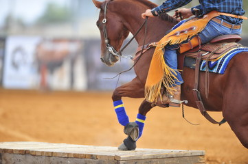 The horse with rider climbs on a wooden platform