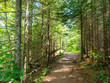 Hiking Trail at Tettegouche State Park in Minnesota 2