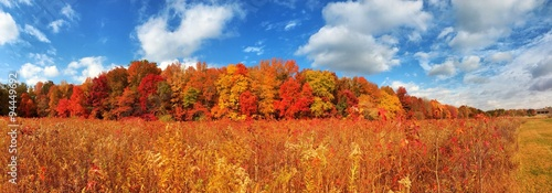 Autumn Pano Woods