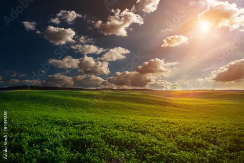 green field - 94491680