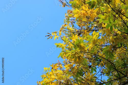 In de dag Bamboo leaves on sky background