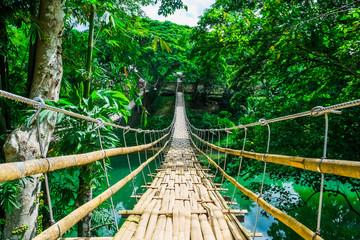 Fototapeta bambusowy las nad rzeką