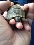 yavru kaplumbağa sevgisi